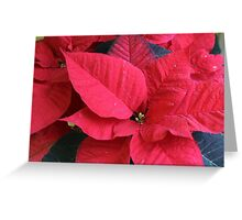 poinsettia flower Greeting Card