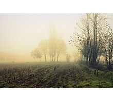 fields in the fog in winter Photographic Print