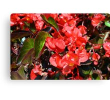 Texture with red flowers and leaves Canvas Print