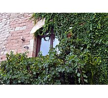 Window on a brick facade covered in leaves Photographic Print
