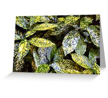 Green leaves with yellow spots texture Greeting Card