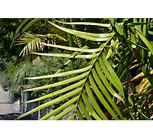 Tropical background with large green palm branch Photographic Print