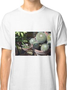 Many cacti in pots, natural background Classic T-Shirt