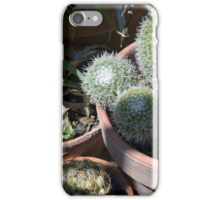 Many cacti in pots, natural background iPhone Case/Skin
