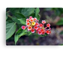 Small delicate flowers, natural backround Canvas Print