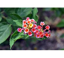Small delicate flowers, natural backround Photographic Print