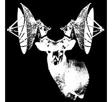 Deer with satellite dish antlers Photographic Print