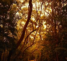 Mahogany Gum Ambience by salsbells69