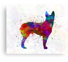 Australian Stumpy Tail Cattle Dog in watercolor Canvas Print