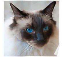 0807 Old Blue Eyes Poster