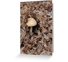 mushrooms in the forest Greeting Card