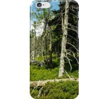 Old Alley of Trees/Forest - Nature Photography iPhone Case/Skin