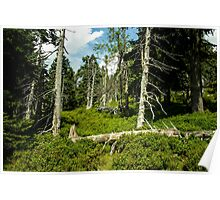 Old Alley of Trees/Forest - Nature Photography Poster