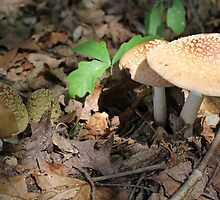 mushroom in the forest by spetenfia