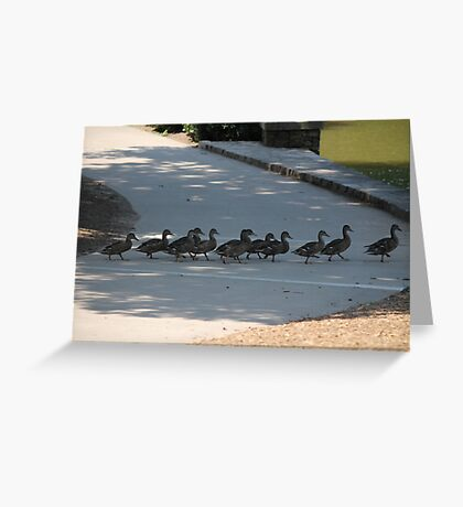 duck on street Greeting Card