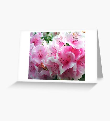 Pink Floral Blossoms Greeting Card