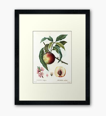 Peach on a branch Framed Print