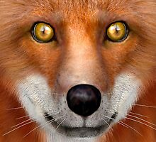 Red Fox by Vac1