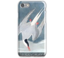Arctic Tern, by John Audubon iPhone Case/Skin