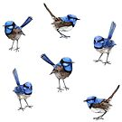 Blue Wrens, Scattered on White by ThistleandFox