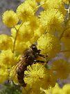 High on Pollen by Georgie Hart