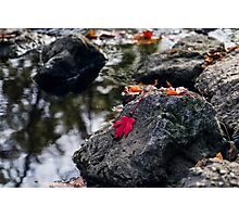 The Red Leaf Photographic Print