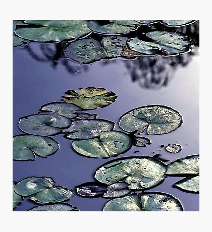 Shining blue waterlily pond Photographic Print