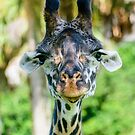 Giraffe Face by Mark Fendrick
