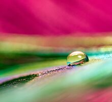 Water drop on feather by Amanda Roberts