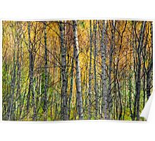 Autumn wood in the Highlands Poster