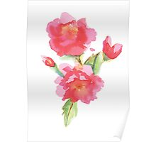 Water Color Roses Poster