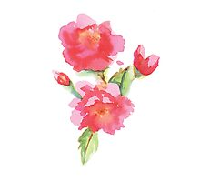 Water Color Roses Photographic Print