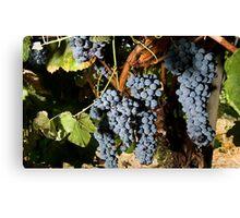 Grapes Vineyard  Canvas Print