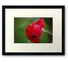 To you my humble unknown friend Framed Print