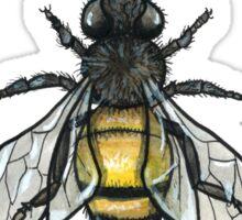 Don't Worry Bee Happy  Sticker
