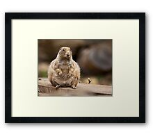 So I'm a Little Short for my Weight Framed Print