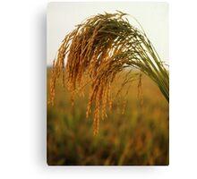 Long Grain Rice Canvas Print