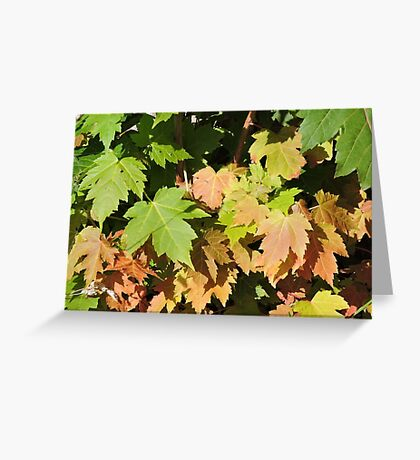 Autumn Is A Second Spring Greeting Card