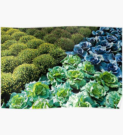 Cabbage Patch Geometry Poster
