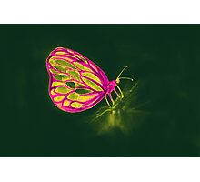 Colorful watercolor of butterfly  Photographic Print