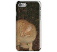 red cat iPhone Case/Skin