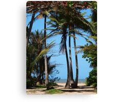 Pathway to Wonga Beach, North Queensland  Canvas Print