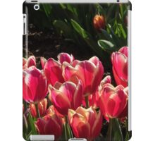 Mass of red with White edging, Tulips at Tesselaar Victoria Australia 20160923 7544 iPad Case/Skin