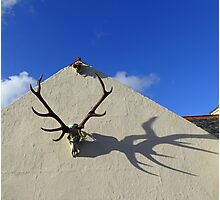 Antler Shadows Photographic Print