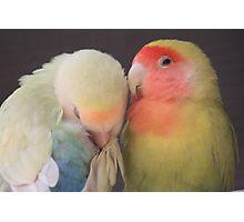 Love Birds Photographic Print