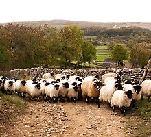Swaledales in Ribblesdale by mikebov