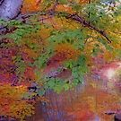 Reflections Of Autumn by kkphoto1