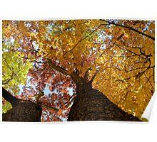 Autumn Rainbow Poster