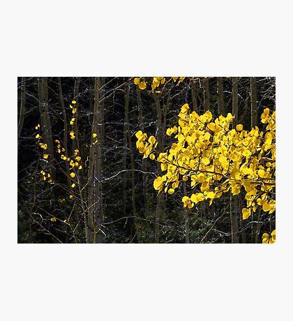 Gold On Dark in Landscape 17x11 Photographic Print