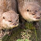 Otters by M.S. Photography & Art